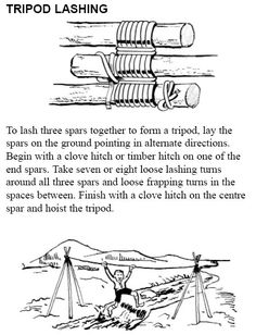 Tripod lashing for making bean trellises and playhouses. Lash FIRST, raise later. After the first three you can fill in with smaller poles.