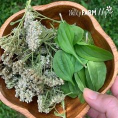 Salve Recipes, Herb Recipes, Plant Projects, Lathe Projects, Router Wood, Wood Lathe, Cnc Router, Plantain Herb, Heel Balm