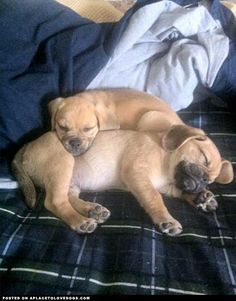 A Puggle Snuggle :)