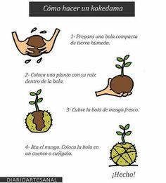 Una kokedama es una planta cultivada sobre una bola de musgo y sustrato, es decir sin maceta. http://www.invasionverde.com/blog/pl  Una kokedama es una planta cultivada sobre una bola de musgo y sustrato, es decir sin maceta.
