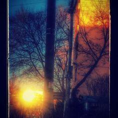 #sunncameout #sunwinter #natura #treescollection #snowday #toronto #sunset🌅