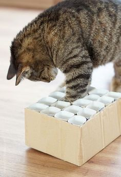 Ein super einfaches DIY für eine Fummelkiste als Katzenspielzeug aus Klopapierrollen.
