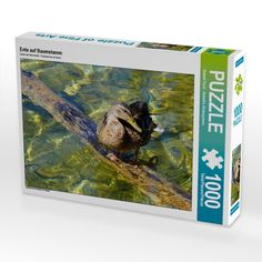 Pinterest Instagram, Puzzle, Painting, Products, Pictures, Europe, Mallard, Kinds Of Birds, Great Gifts