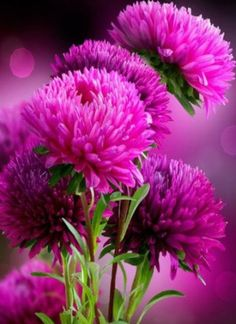 Beautiful flowers - Gyönyörű virágok - Megaport Media Exotic Flowers, Love Flowers, My Flower, Flower Power, Beautiful Flowers, Happy Thursday Images, Good Morning Beautiful Images, Morning Images, Morning Quotes
