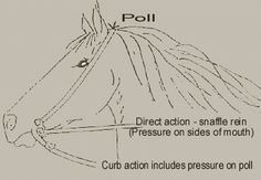 The bit is used to communicate to the horse by applying pressure to different areas of the horse's head