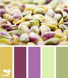 Pistachio Hues...House colors...talked to the Husband, he is for these colors  Light green main part of house, dark green for the trim.  Darker purple for door and smaller trim.