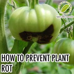 How To Naturally Prevent Plant Rot