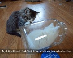 My kitten likes to hide in this jar and it confuses her brother.