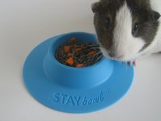 STAYbowl™ Tip-Proof Bowl for Guinea Pigs and Small Pets