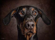 Diego by ExposureArt | fotocommunity.com