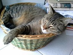 Clyde, dolcissimo micio dormiglione!