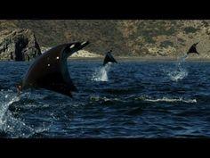 Este evento inexplicable de la naturaleza fue grabado en video ¡No te lo puedes perder!   Diario Ecologia