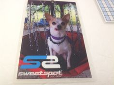 ACCESSORIES {stickers / hats / score cards ETC} - Sweet Spot Disc Golf Golf Pro Shop, Disc Golf, Scores, Boston Terrier, Stickers, Hats, Sweet, Accessories, Candy