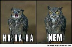 15 Hilarious Owl Memes - World's largest collection of cat memes and other animals Funny Animal Memes, Funny Animal Pictures, Funny Animals, Cute Animals, Funny Memes, Animal Humor, Pretty Animals, Wild Animals, Smosh