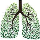 9 alimentos para unos pulmones sanos ecoagricultor.com