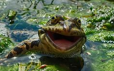CONSERVE YOUR WATER AND HELP KEEP THE FROG HAPPY !!!  CHECK OUT HOW AT www.irrigro.com