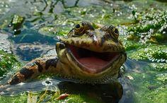 fotos de animales muy divertidas mis gafas de pasta rana riendo