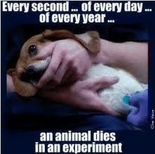 642 Best Quotes Vivisection Tests On Animals Images Animal