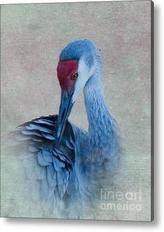 Sandhill Crane Acrylic Print By Betty Larue