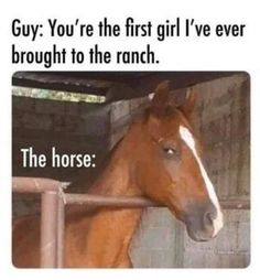 Dank Memes Funny, Stupid Funny Memes, Funny Stuff, Funny Pins, Hilarious, Best Funny Pictures, Funny Photos, Funniest Photos, Horse Meme
