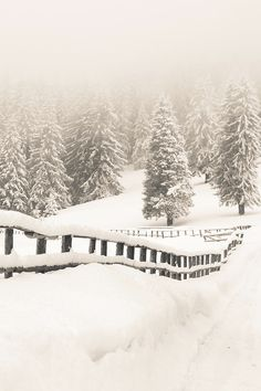 Snow Laden Fence In the Carpathian Mountains