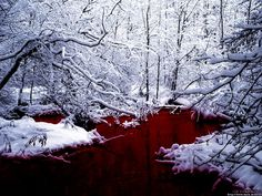 Blood snow!