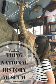 New Blog Post: Visit | Tring National History Museum   #tring #tringnationalhistorymuseum #nationalhistorymuseum #animals #animalhistory #blogpost #newblogpost #blogger #blogging #lifestyle #lifestyleblogger #daysout #visittring #visit
