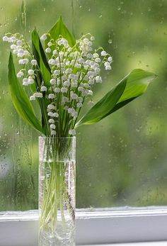 There is something just ever so romantic about Lilies of The Valley
