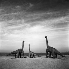 dinosaurs | Flickr - Photo Sharing!
