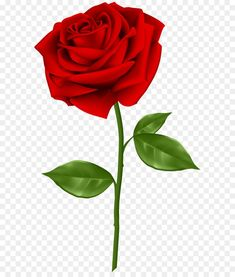 Desktop Background Pictures, Photo Background Images Hd, Studio Background Images, Background Images For Editing, Background For Photography, Rose Flower Png, Red Rose Png, Birthday Background Design, Flower Png Images