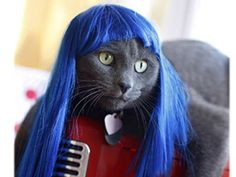 Cat Wig - For the cat lover who has finally gone completely insane.