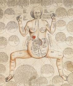 The Royal Library, Copenhagen. NKS 84 b, detail of p.3. Anonymi medicina illustrata. 16th century.