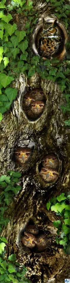 Penthouse for a parliament of owls. One of them is thinking very deep and is coming up with a plan.