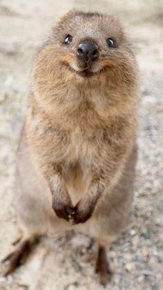 Smiling Animals, Fluffy Animals, Happy Animals, Animals And Pets, Save Animals, Cute Little Animals, Cute Funny Animals, Cute Animals Images, Beautiful Creatures