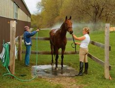 horse barns and stalls | Start by selecting a suitable location for your wash area. Most people ...