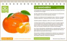 Conoce las grandes bondades de la mandarina, sus beneficios, sus nutrientes y sus grandes propiedades.