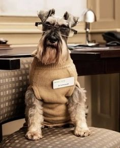 You hate how you look in glasses. | Community Post: These Mini Schnauzers Will Solve All Of Your Problems