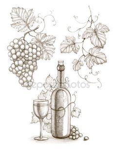 Pencil drawing of wine bottle and grape