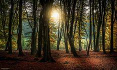 "The Speulder Forest last October. Best viewed on black (click image or press ""M"")"