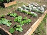 DIY How to build your own square foot garden using raised garden beds