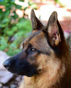 Pitbull English Bulldog Mix Mixed Cat And Dog Breeds