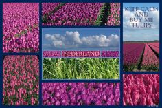 Nederland tulpen