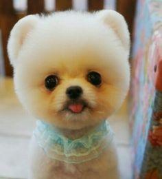 Cute pom!