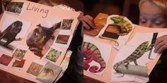 Finding & Sorting Pictures of Living and Nonliving Things