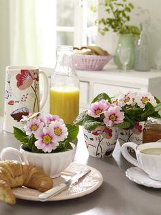 Primeln in Rosa/HellrosaKaffeetassen mit Henkel (z.B. von Casagent)Tassen mit Blumendesign (z.B. von Green Gate)1. Primeln aus ihrem
