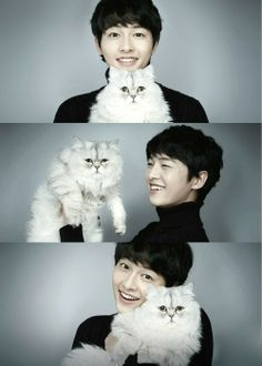 Two of my loves, fluffy kitties and Song Joong Ki Oppa
