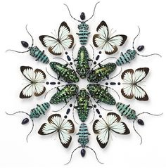The Art of Biophilia: Extraordinary Mosaics Incorporating Earth's Most Colorful Creatures | Brain Pickings
