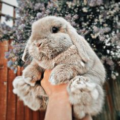 Baby Animals Super Cute, Cute Baby Bunnies, Cute Baby Dogs, Cute Dogs And Puppies, Cute Little Animals, Cute Funny Animals, Cute Cats, Bunny, Baby Animals Pictures