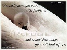 Refuge.Renew your strength in the Lord, find rest in Him and let Him renew your mind as you wake up to a new day. You will find life easier, as if someone is helping to work things out, even without you doing anything. You will start to open your eyes to the little things in life that you have never noticed before. God's presence must be with us every day if we want to live a glorious life. Let Him dwell in your heart and His peace be you peace.