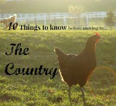 What to know BEFORE moving to the country - Hilarious!
